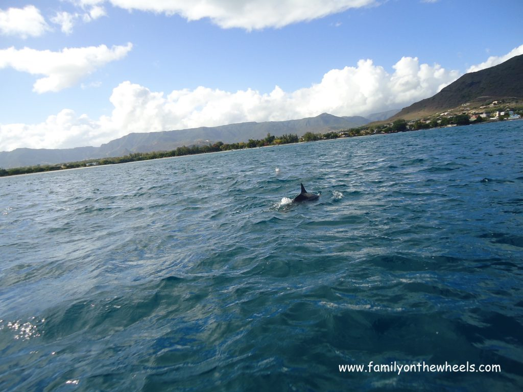 Dolphin watching at Mauritius