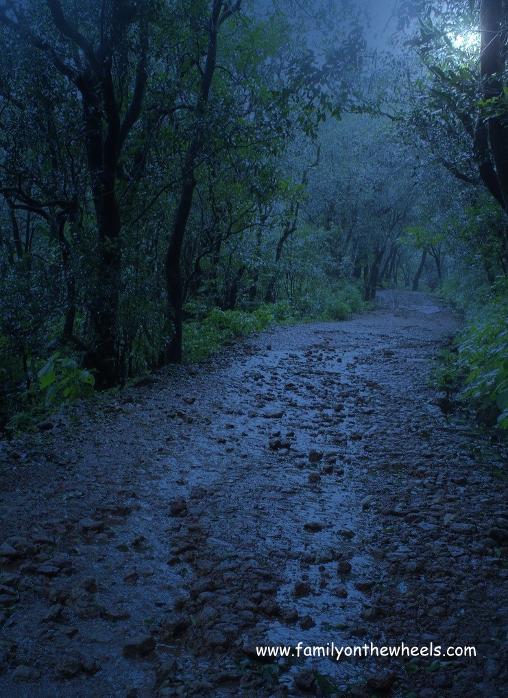 Matheran Jungle at Night