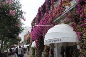 Floral lanes of Capri