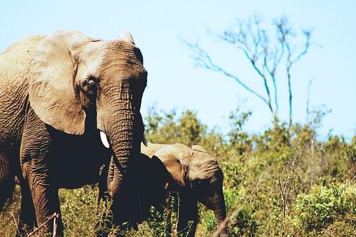 Wild Elephant atJim Corbett