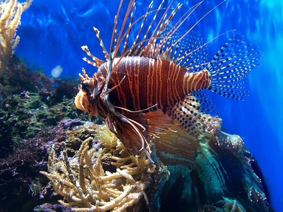 London Aquarium for kids