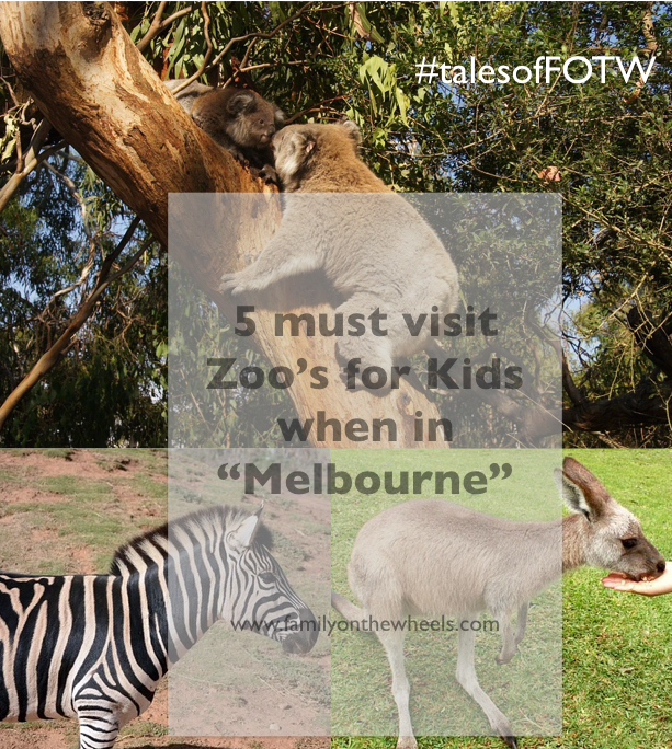 Melbourne Zoo for kids